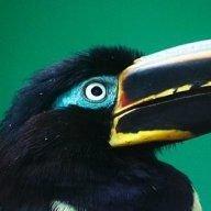 toucan-man