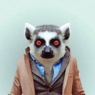 Beta Lemur